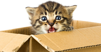 Moving With Pets Across Country: Reducing Stress Before and During the Move